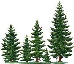 Zinnfigur Tannenwald, 5 Bäume, zum Stellen