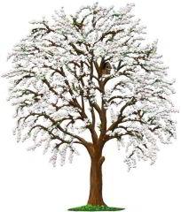Zinnfigur Kirschbaum mit weißen Blüten, zum Stellen